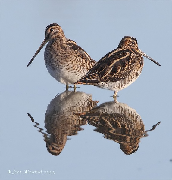 Common Snipe x 2  VP 31 10 09 IMG_7179_filtered
